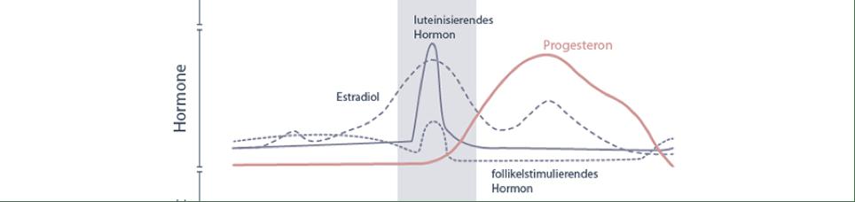 Hormone_Weiblicher Zyklus